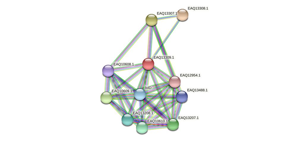 RB2654_09574 protein (Maritimibacter alkaliphilus) - STRING interaction network