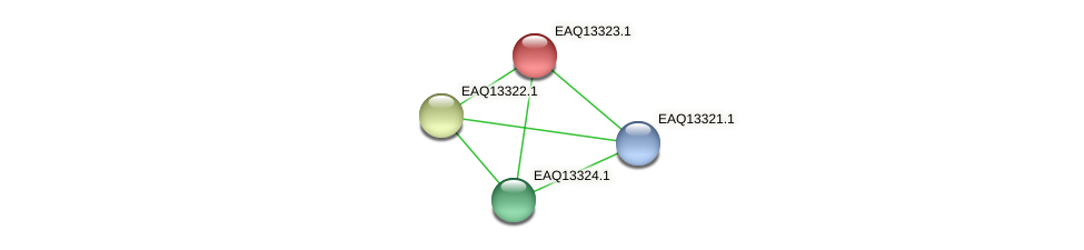 RB2654_09644 protein (Maritimibacter alkaliphilus) - STRING interaction network