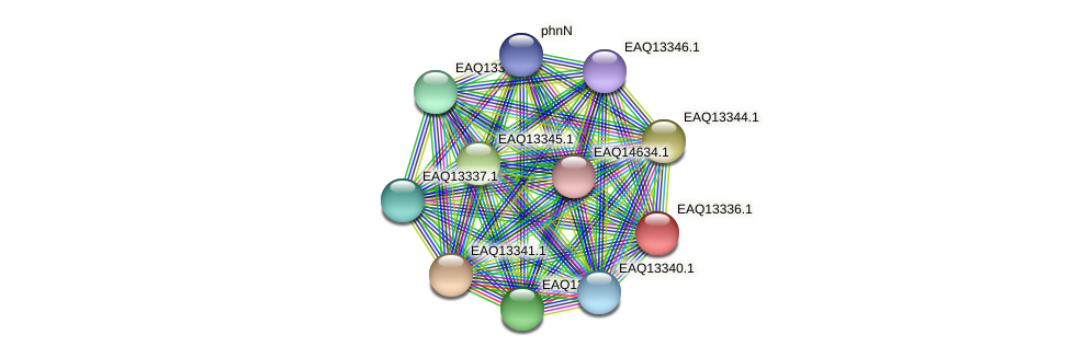 RB2654_09709 protein (Maritimibacter alkaliphilus) - STRING interaction network