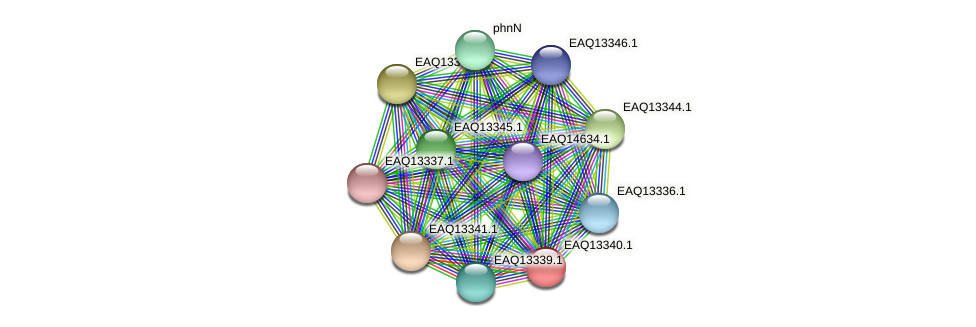 RB2654_09729 protein (Maritimibacter alkaliphilus) - STRING interaction network