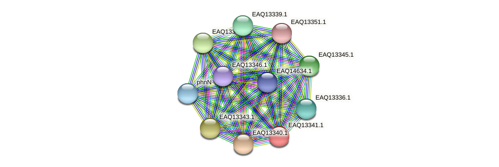 RB2654_09734 protein (Maritimibacter alkaliphilus) - STRING interaction network