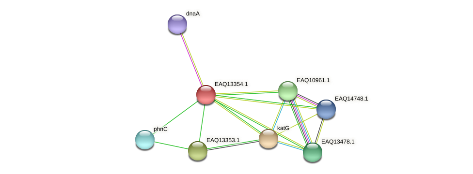 RB2654_09799 protein (Maritimibacter alkaliphilus) - STRING interaction network