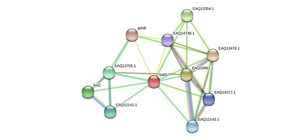 katG protein (Maritimibacter alkaliphilus) - STRING interaction network