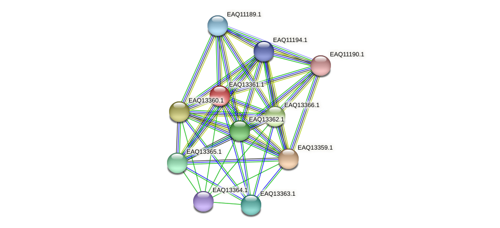 RB2654_09834 protein (Maritimibacter alkaliphilus) - STRING interaction network