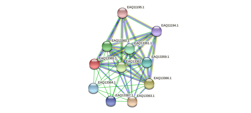 RB2654_09854 protein (Maritimibacter alkaliphilus) - STRING interaction network