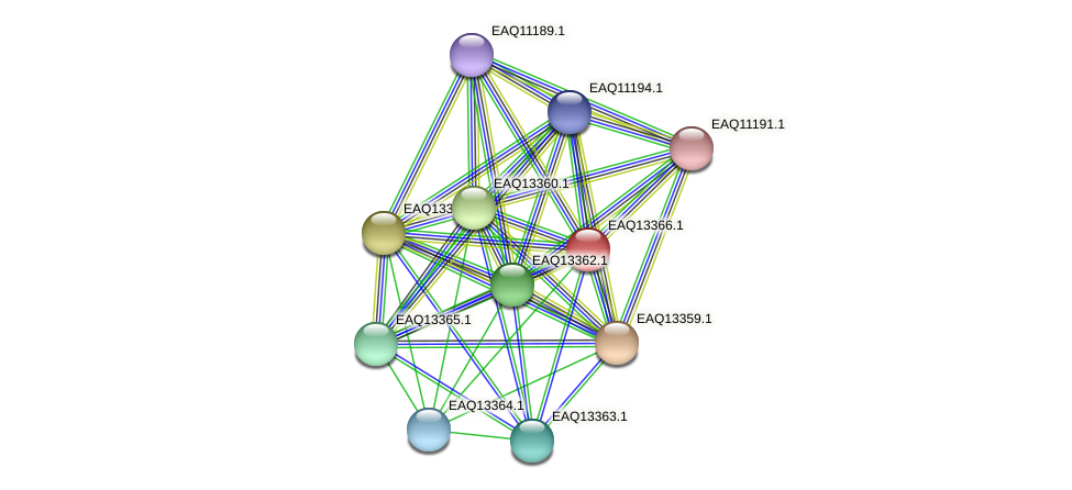 RB2654_09859 protein (Maritimibacter alkaliphilus) - STRING interaction network
