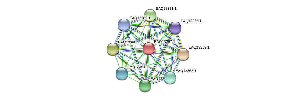 RB2654_09864 protein (Maritimibacter alkaliphilus) - STRING interaction network