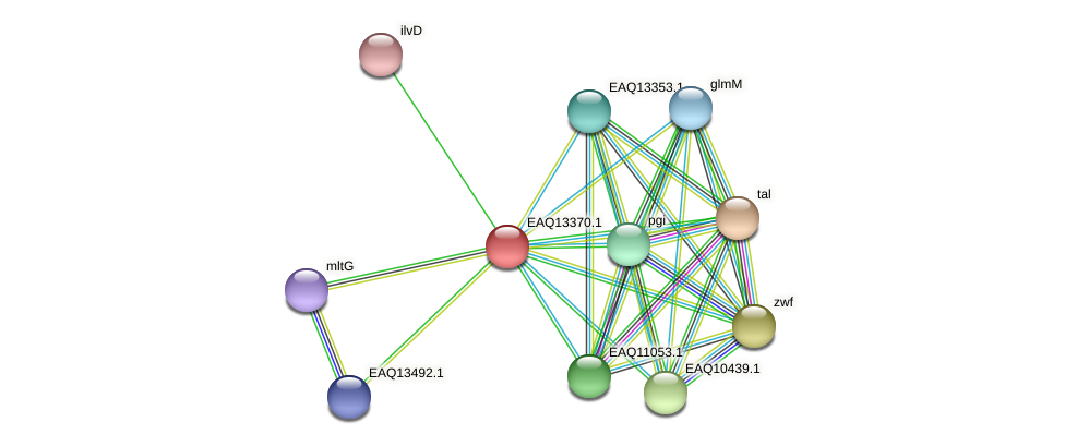 RB2654_09879 protein (Maritimibacter alkaliphilus) - STRING interaction network