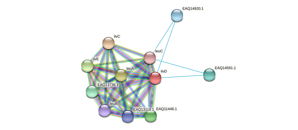 RB2654_09884 protein (Maritimibacter alkaliphilus) - STRING interaction network