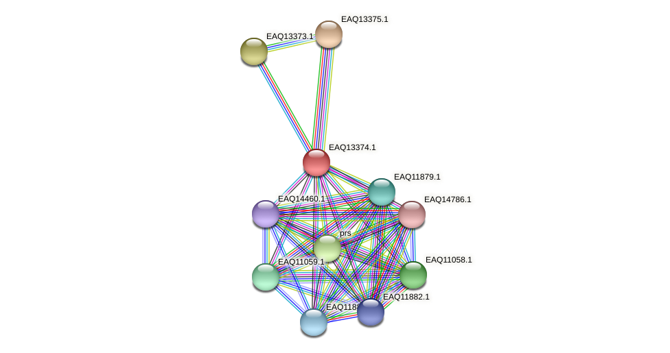 RB2654_09899 protein (Maritimibacter alkaliphilus) - STRING interaction network