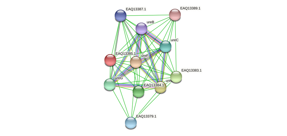 RB2654_09954 protein (Maritimibacter alkaliphilus) - STRING interaction network