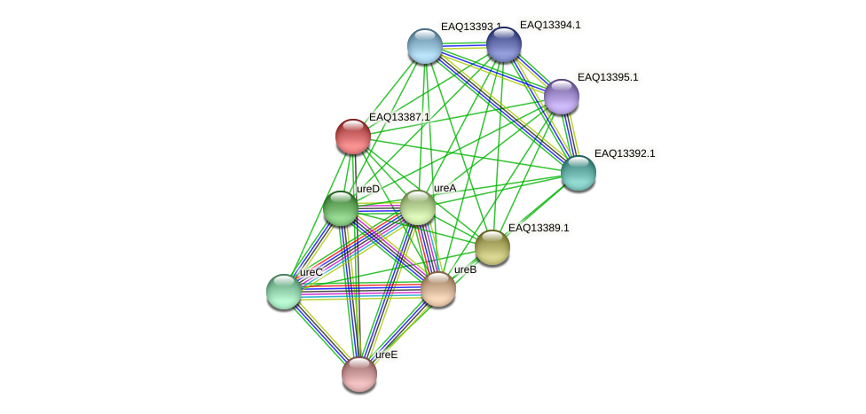 RB2654_09964 protein (Maritimibacter alkaliphilus) - STRING interaction network