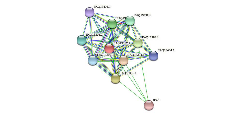 RB2654_09989 protein (Maritimibacter alkaliphilus) - STRING interaction network
