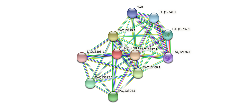RB2654_10019 protein (Maritimibacter alkaliphilus) - STRING interaction network