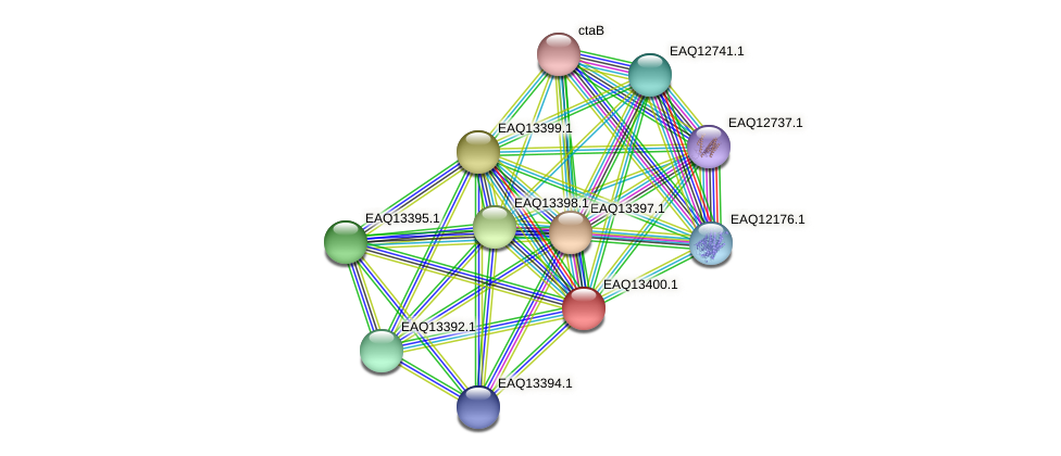 RB2654_10029 protein (Maritimibacter alkaliphilus) - STRING interaction network