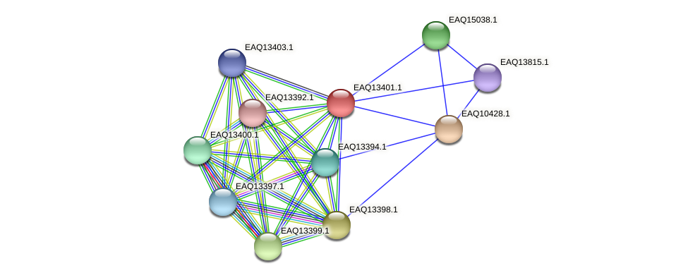 RB2654_10034 protein (Maritimibacter alkaliphilus) - STRING interaction network