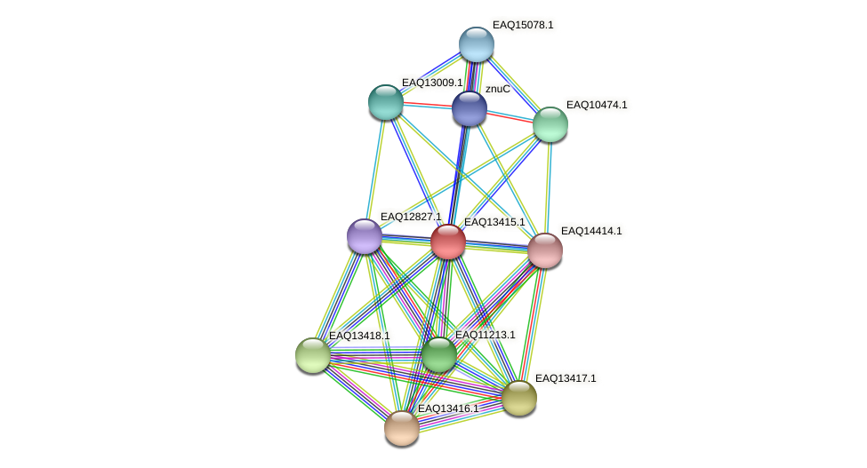 RB2654_10104 protein (Maritimibacter alkaliphilus) - STRING interaction network
