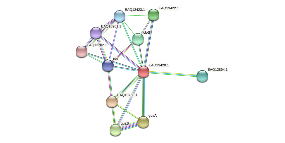 RB2654_10129 protein (Maritimibacter alkaliphilus) - STRING interaction network