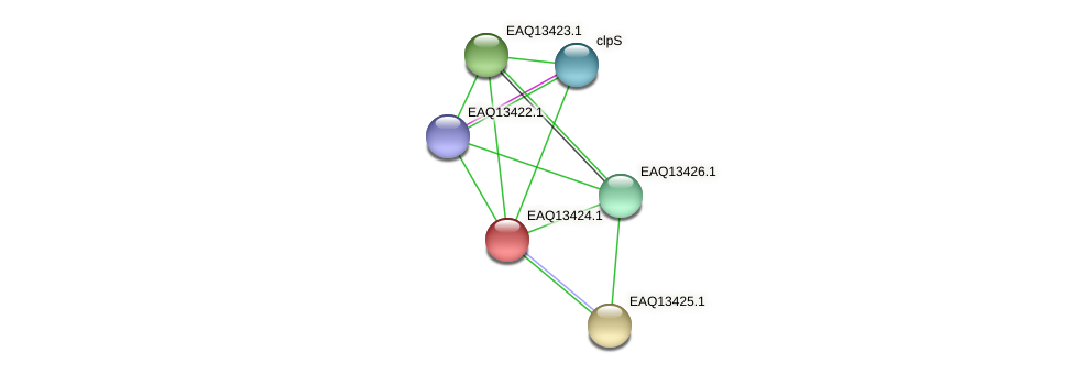 RB2654_10149 protein (Maritimibacter alkaliphilus) - STRING interaction network