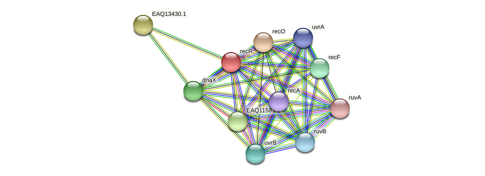 recR protein (Maritimibacter alkaliphilus) - STRING interaction network