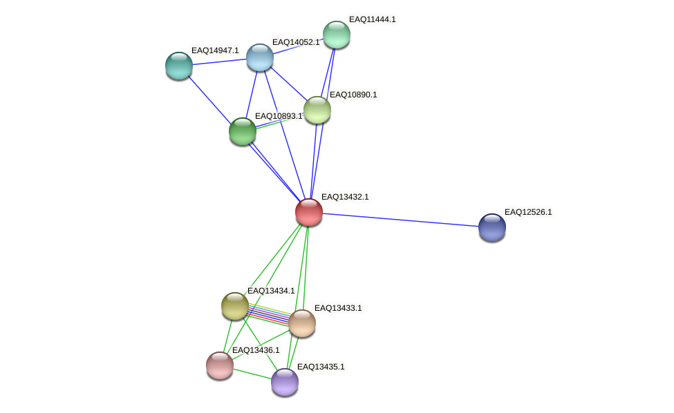 RB2654_10189 protein (Maritimibacter alkaliphilus) - STRING interaction network