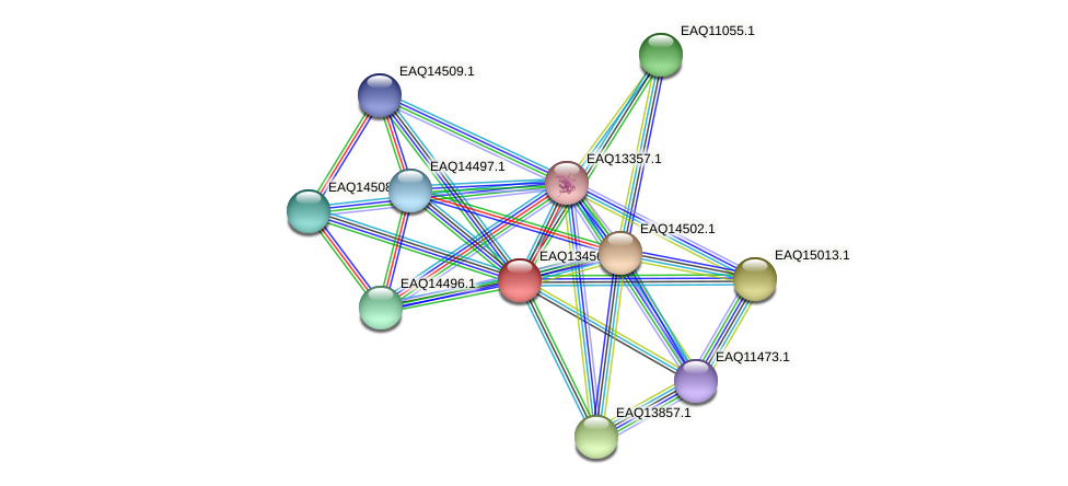 RB2654_10309 protein (Maritimibacter alkaliphilus) - STRING interaction network