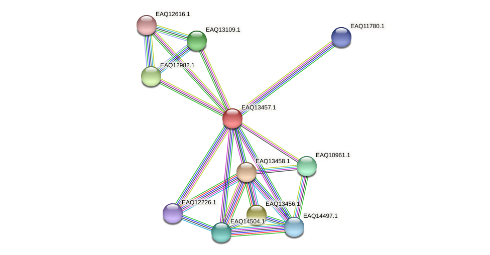 RB2654_10314 protein (Maritimibacter alkaliphilus) - STRING interaction network
