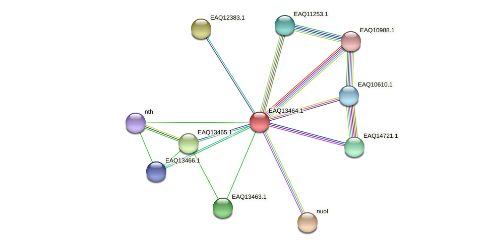 RB2654_10349 protein (Maritimibacter alkaliphilus) - STRING interaction network