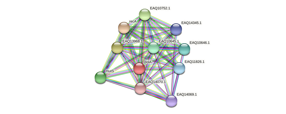 RB2654_10393 protein (Maritimibacter alkaliphilus) - STRING interaction network