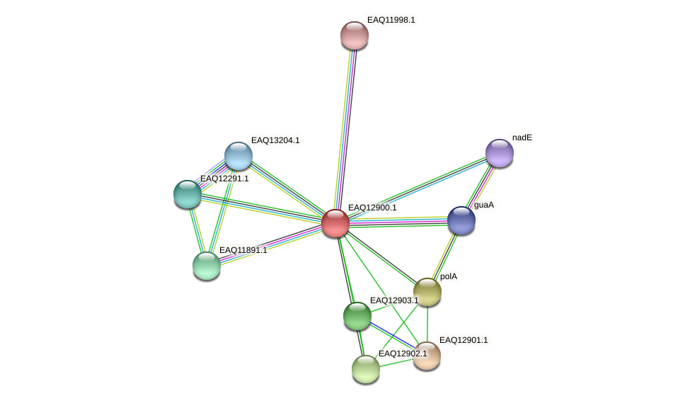 RB2654_10398 protein (Maritimibacter alkaliphilus) - STRING interaction network