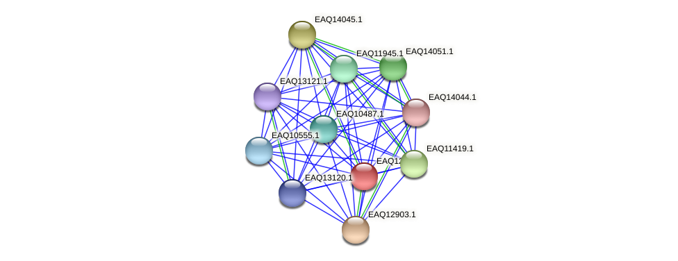 RB2654_10418 protein (Maritimibacter alkaliphilus) - STRING interaction network