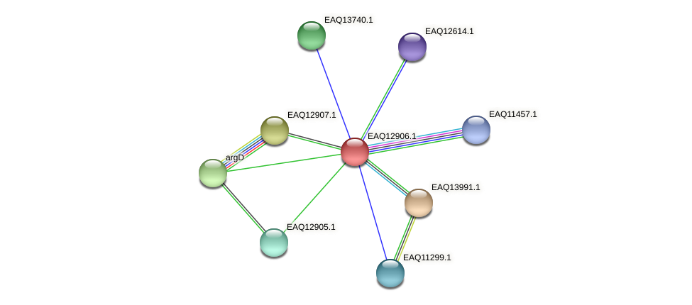 RB2654_10428 protein (Maritimibacter alkaliphilus) - STRING interaction network