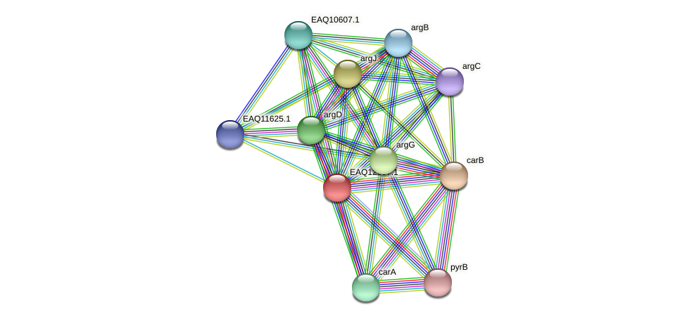 RB2654_10433 protein (Maritimibacter alkaliphilus) - STRING interaction network