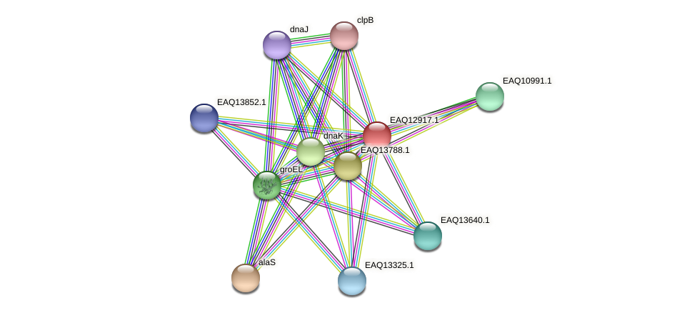 RB2654_10483 protein (Maritimibacter alkaliphilus) - STRING interaction network