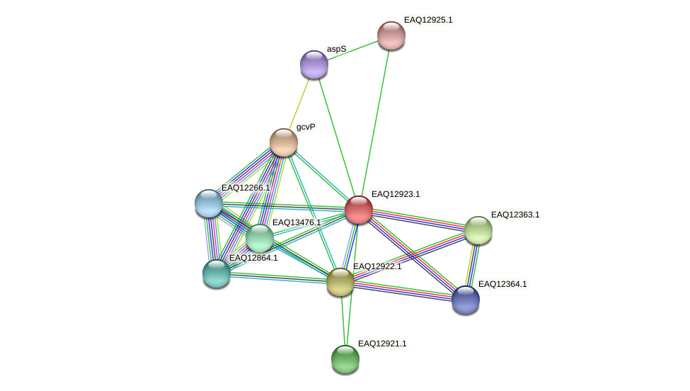 RB2654_10513 protein (Maritimibacter alkaliphilus) - STRING interaction network