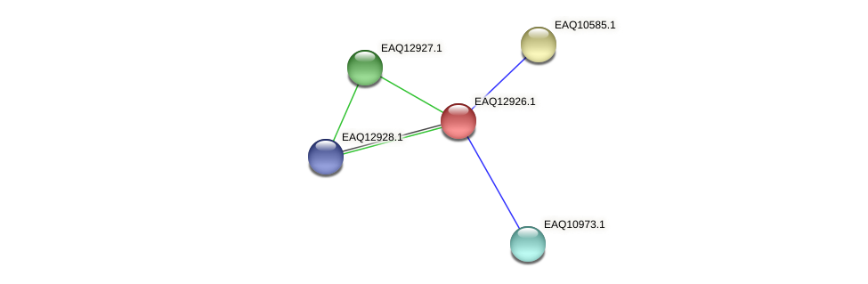 RB2654_10528 protein (Maritimibacter alkaliphilus) - STRING interaction network