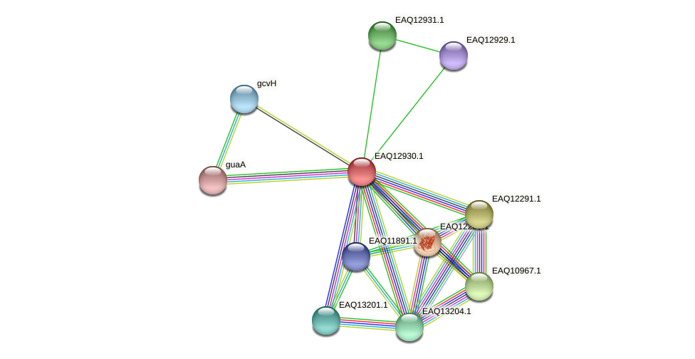 RB2654_10548 protein (Maritimibacter alkaliphilus) - STRING interaction network