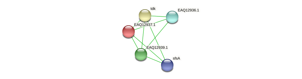 RB2654_10583 protein (Maritimibacter alkaliphilus) - STRING interaction network