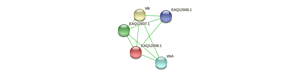 RB2654_10593 protein (Maritimibacter alkaliphilus) - STRING interaction network