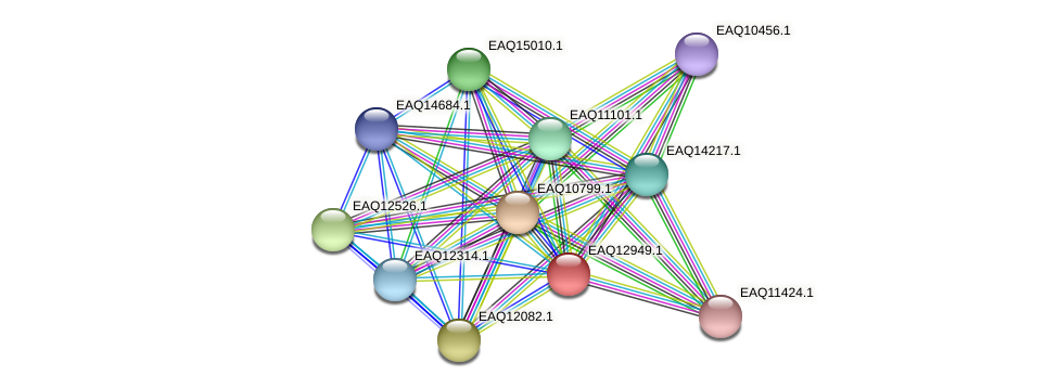 RB2654_10643 protein (Maritimibacter alkaliphilus) - STRING interaction network