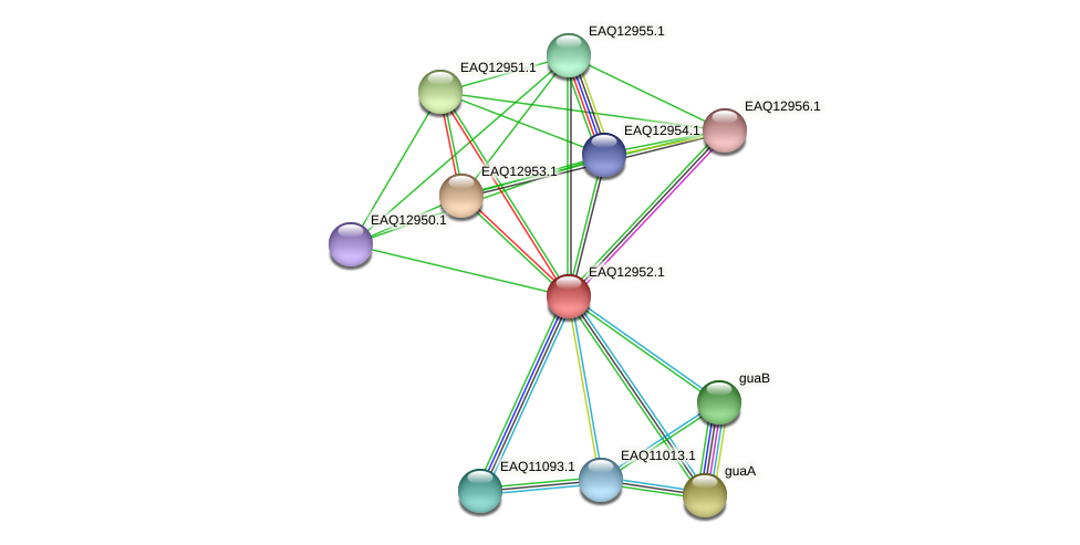 RB2654_10658 protein (Maritimibacter alkaliphilus) - STRING interaction network