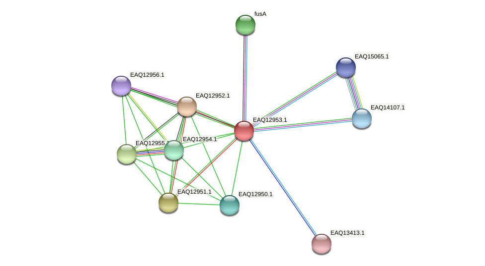 RB2654_10663 protein (Maritimibacter alkaliphilus) - STRING interaction network
