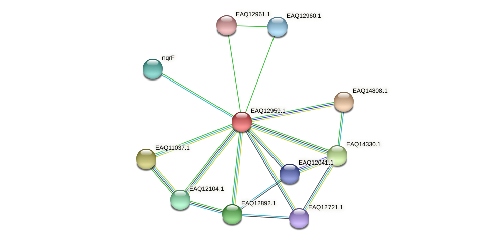 RB2654_10693 protein (Maritimibacter alkaliphilus) - STRING interaction network
