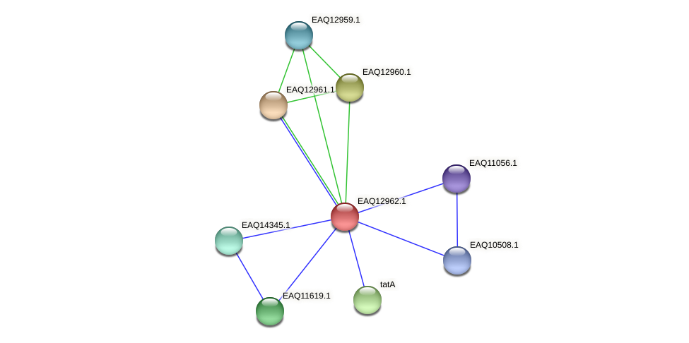 RB2654_10708 protein (Maritimibacter alkaliphilus) - STRING interaction network