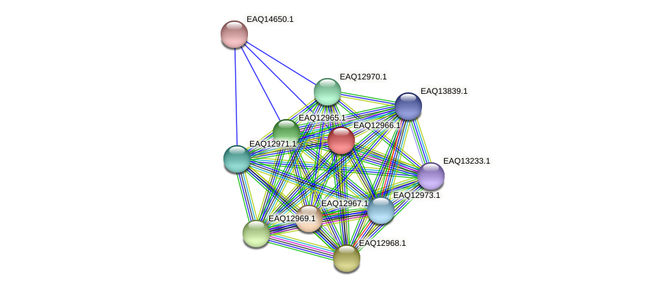 RB2654_10728 protein (Maritimibacter alkaliphilus) - STRING interaction network