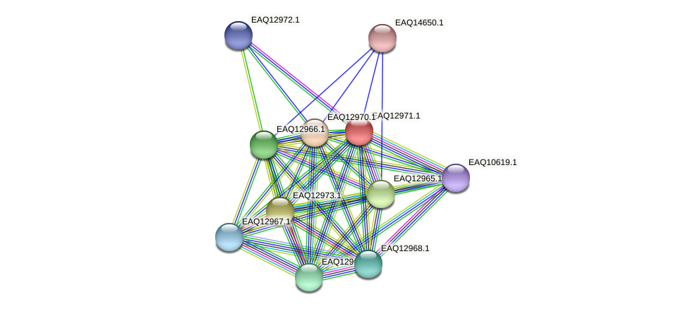 RB2654_10753 protein (Maritimibacter alkaliphilus) - STRING interaction network