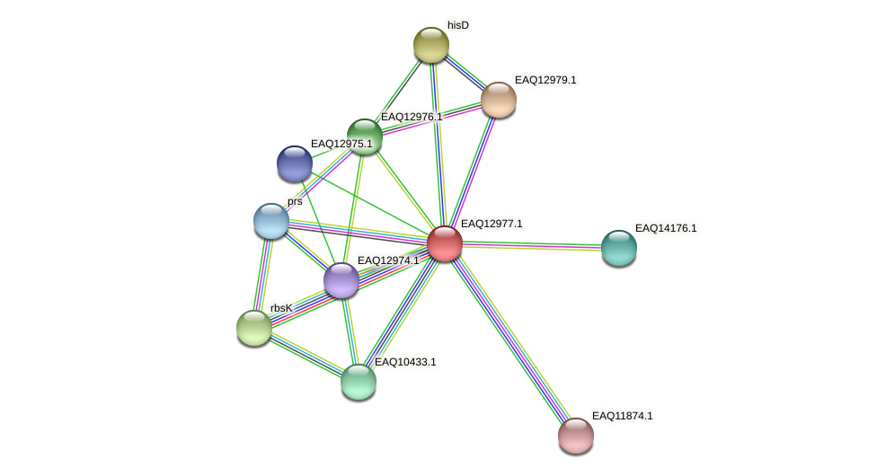 RB2654_10783 protein (Maritimibacter alkaliphilus) - STRING interaction network