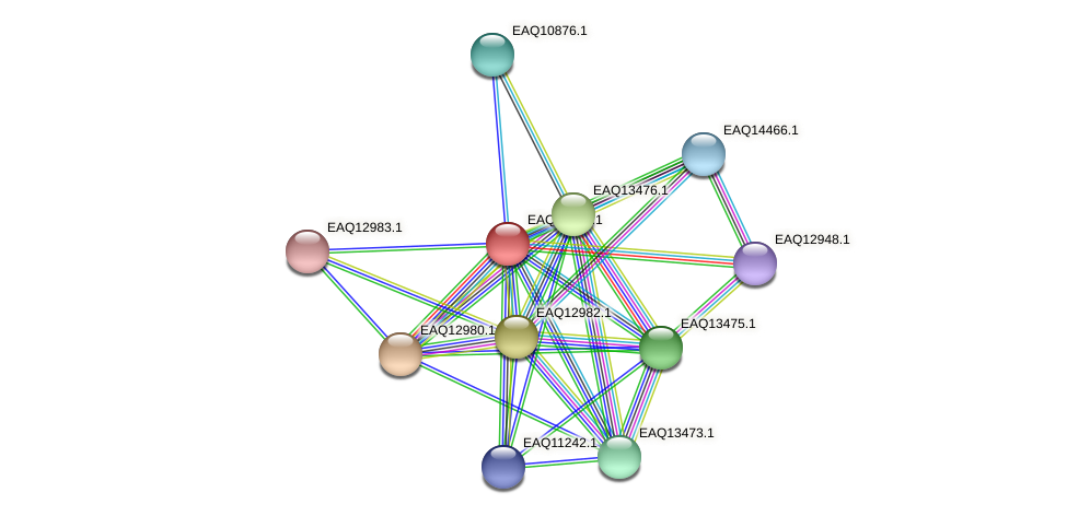 RB2654_10803 protein (Maritimibacter alkaliphilus) - STRING interaction network