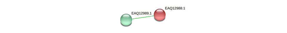 RB2654_10838 protein (Maritimibacter alkaliphilus) - STRING interaction network