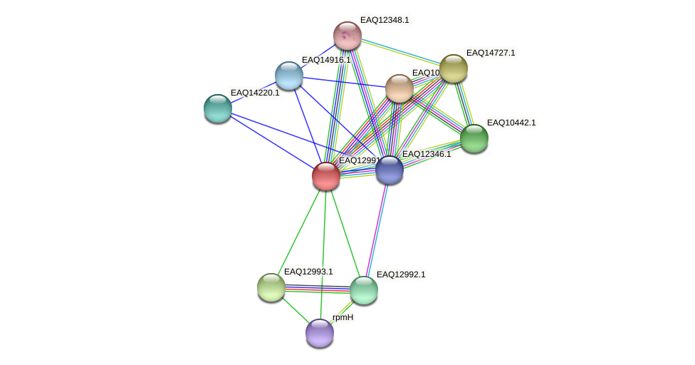 RB2654_10853 protein (Maritimibacter alkaliphilus) - STRING interaction network